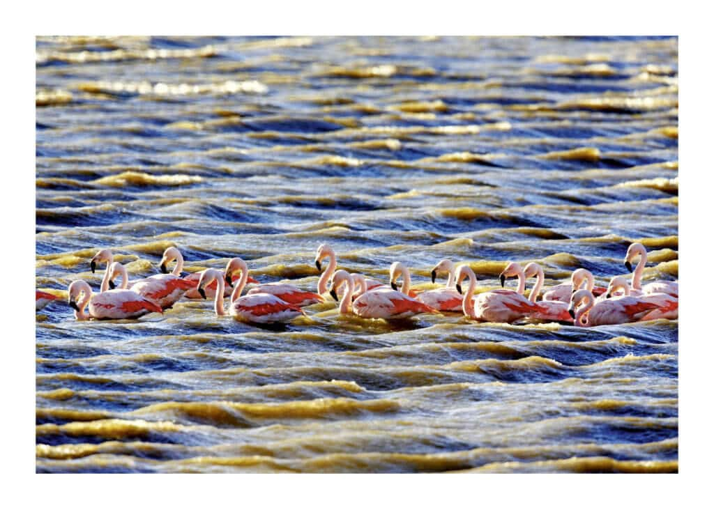 Peter Ginter Photography - FineArt-Print - Flamingos - Southern Argentina